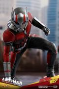 ANT-MAN 1/6 FIGURE - ANT-MAN & WASP - HOT TOYS